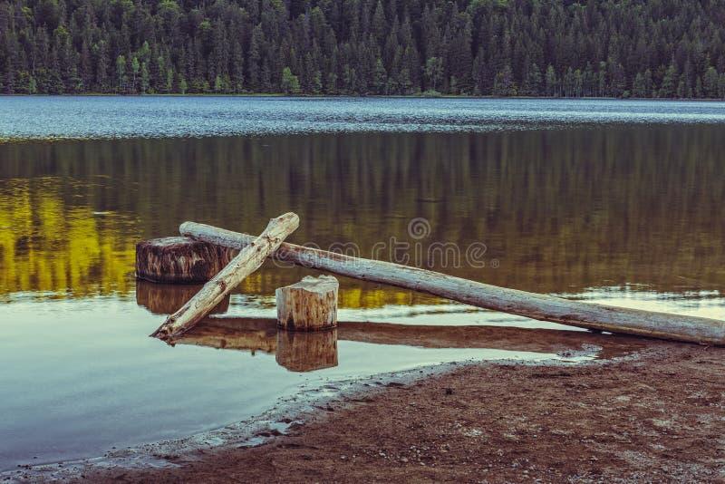 Sjölandskap med stupade skalade träd royaltyfri fotografi
