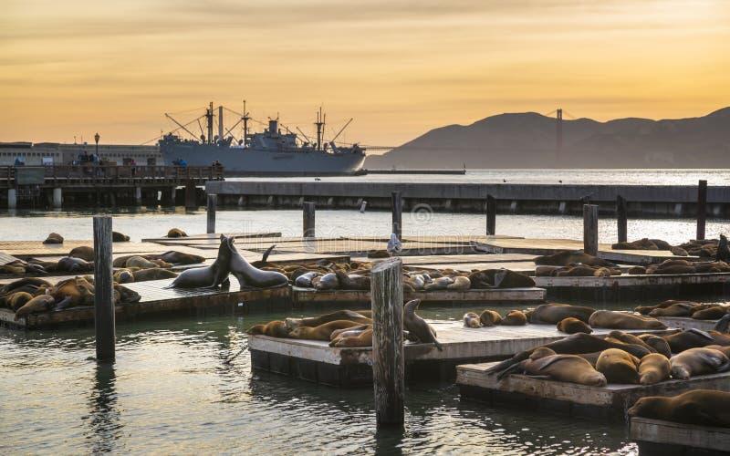 Sjölejon på pir 39 i den Fishermans hamnplatsen, San Francisco arkivbilder