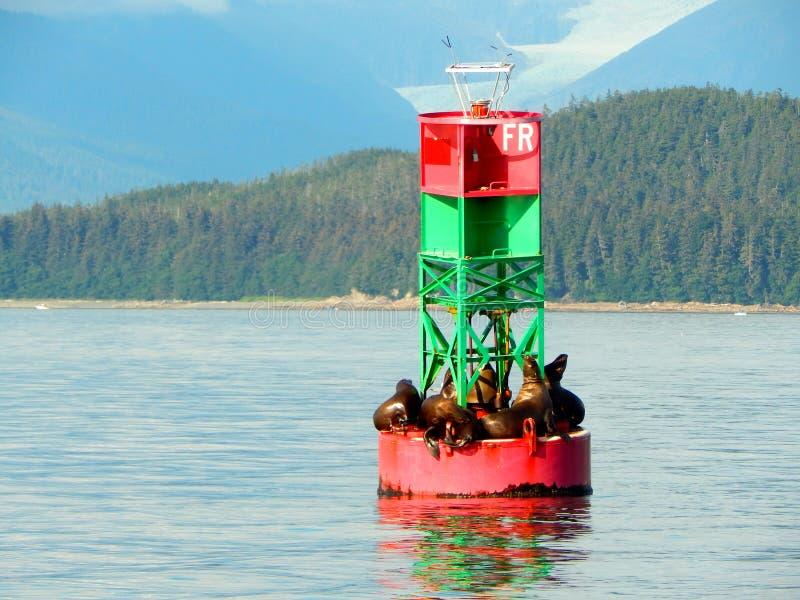 Sjölejon som vilar på en havboj royaltyfri foto