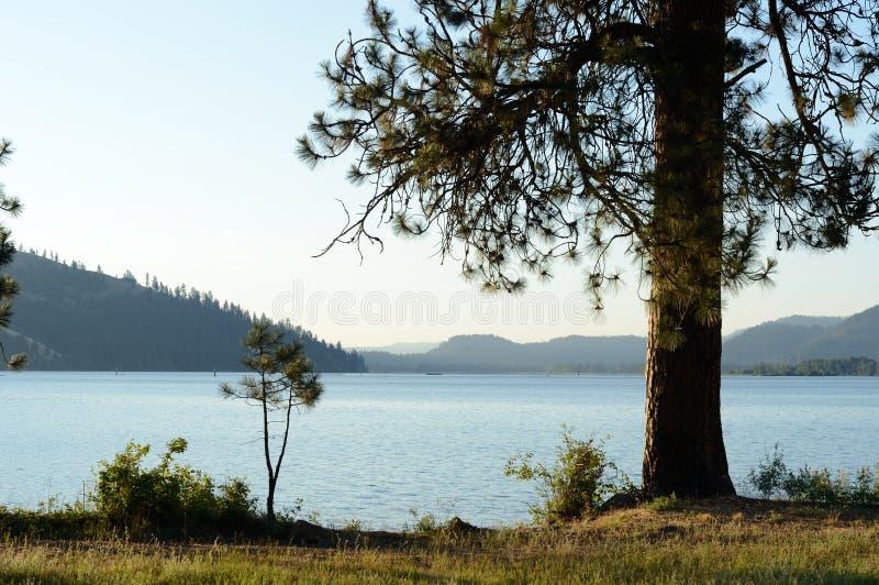 Sjön Coeur D 'Alene med Ponderosa sörjer arkivbilder