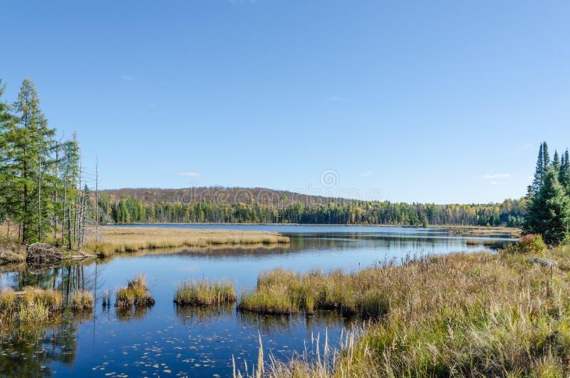 Sjön i Algonquin parkerar royaltyfri foto