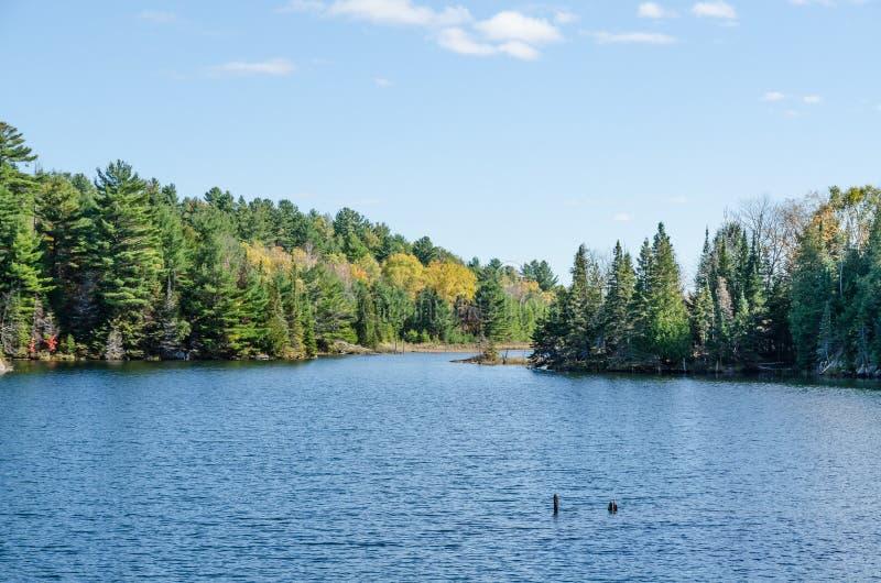 Sjön i Algonquin parkerar royaltyfria bilder