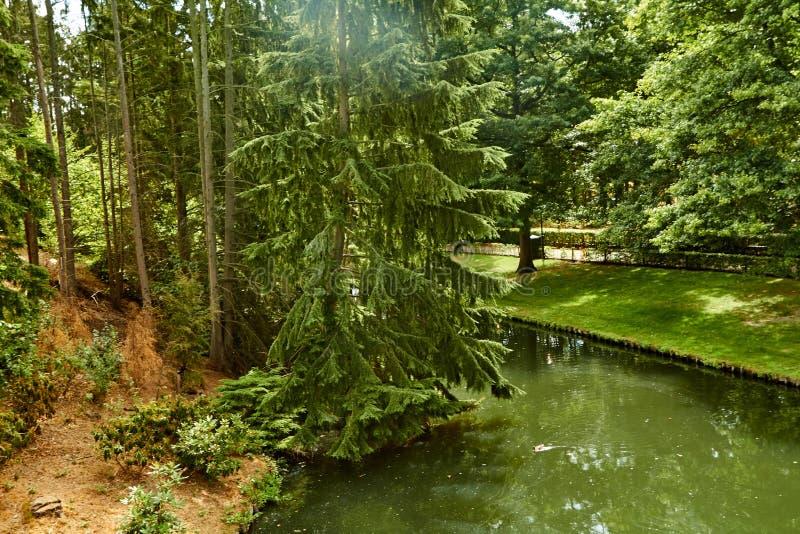 sjön i sommar parkerar H?rlig sommarpark Nederländerna Juli fotografering för bildbyråer