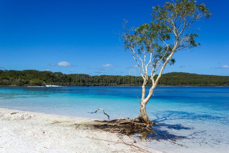Sjön Mackenzie på Fraser Island av solskenet av Queensland är en härlig sötvattens- sjö som är populär med turister som besöker royaltyfri fotografi