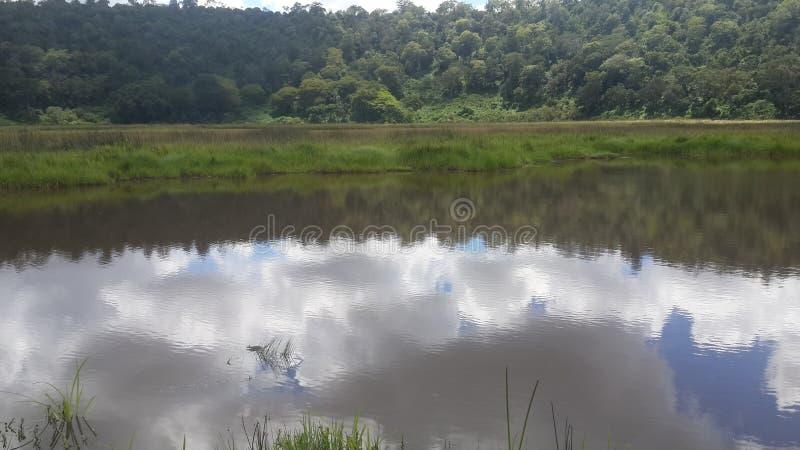 Sjönkunga i Kenya royaltyfria bilder