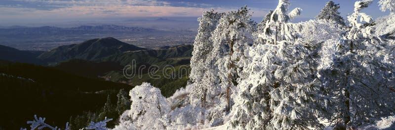 Sjöpilört i vinter, Kalifornien arkivbilder