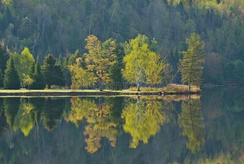 Sjöreflexion av träd i tidig vår royaltyfria bilder
