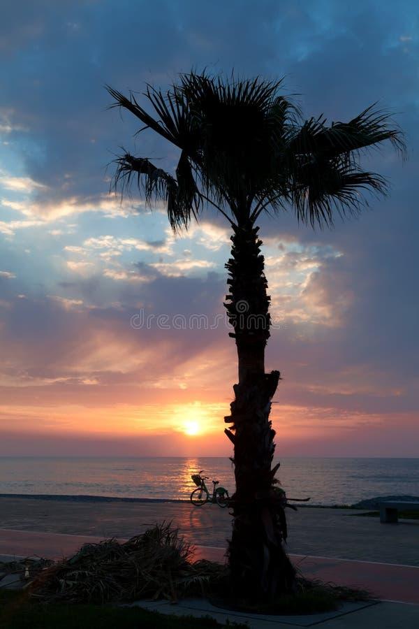 Sjösida av Batumi med palmträdkonturn fotografering för bildbyråer