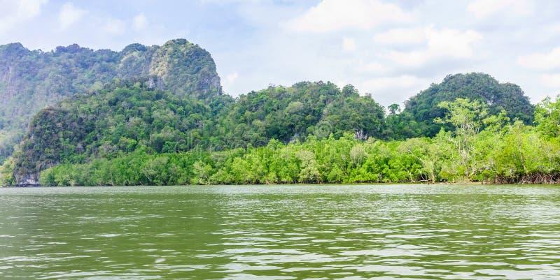 Sjösidan och mangroveskogen royaltyfria foton