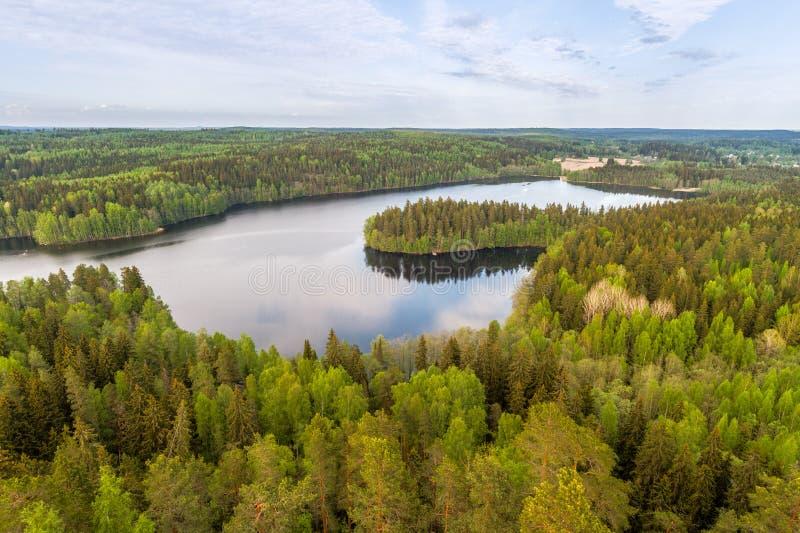 Sjösikt med skogen arkivbilder