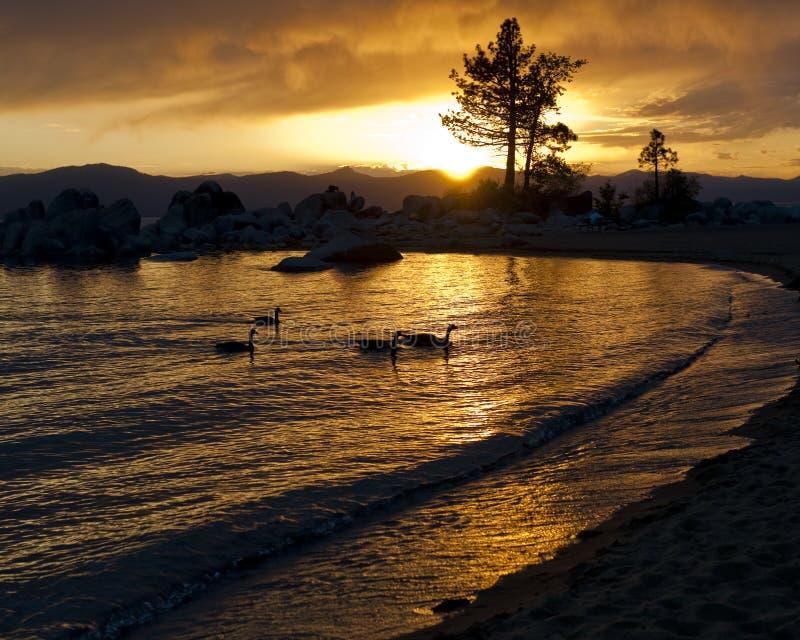 Sjösolnedgång med konturn och änder fotografering för bildbyråer