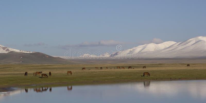 Sjöson-Kul, Kirgizistan royaltyfria bilder