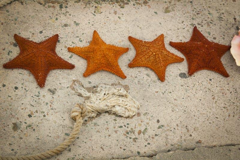 sjöstjärna fotografering för bildbyråer