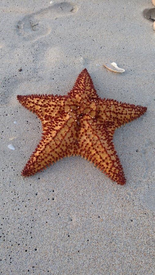 sjöstjärna arkivfoto