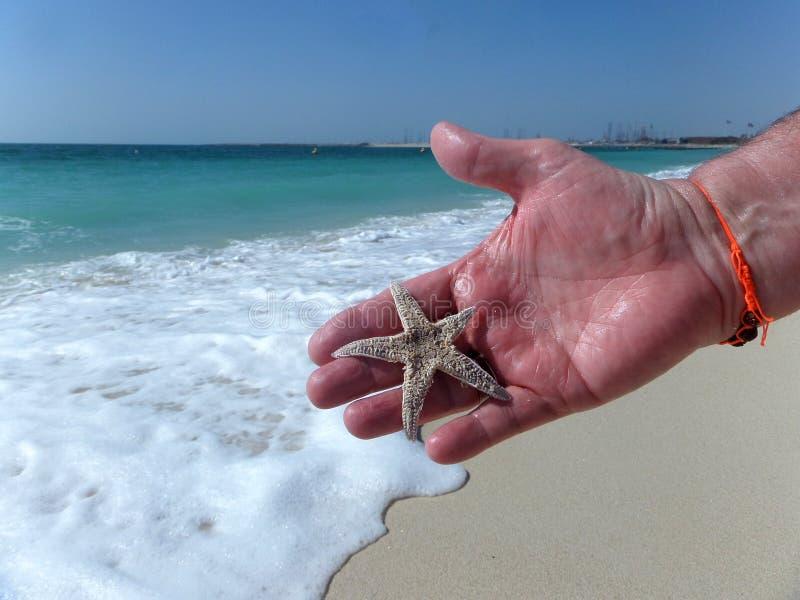 Sjöstjärna i handen arkivbild