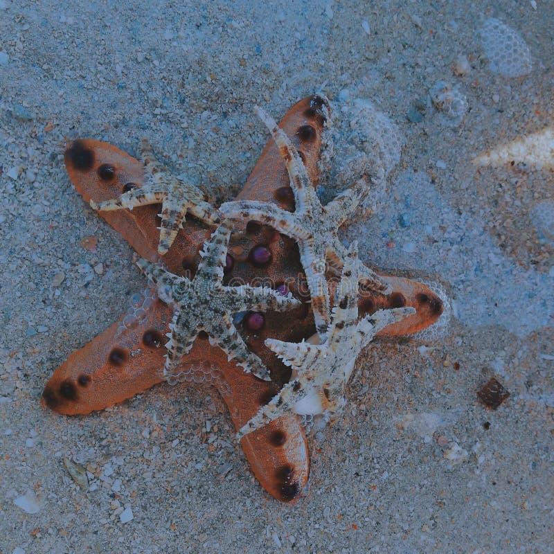 Sjöstjärna i havet! arkivbild