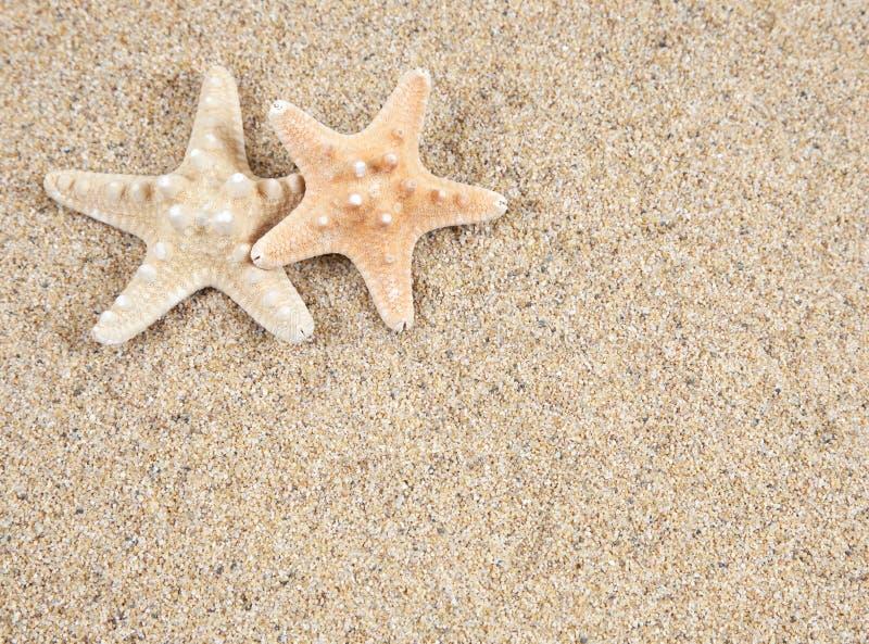 Sjöstjärna och sand arkivbild