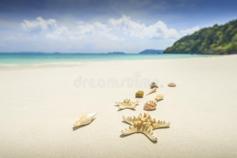 Sjöstjärna och skal på härlig tropisk strandbakgrund med royaltyfri foto