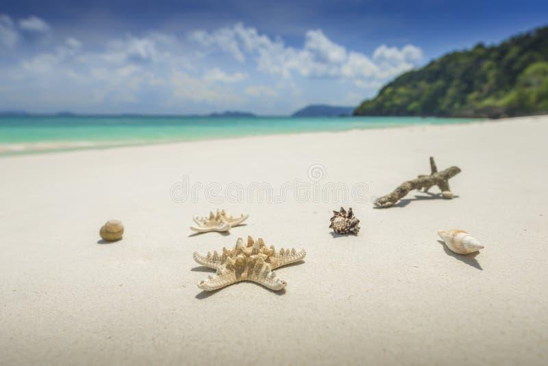 Sjöstjärna och skal på härlig tropisk strandbakgrund med fotografering för bildbyråer