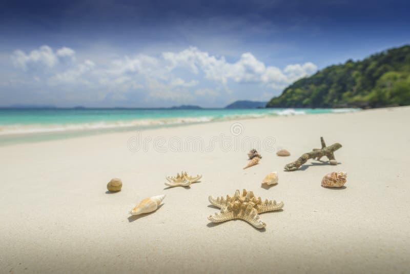Sjöstjärna och skal på härlig tropisk strandbakgrund med royaltyfria foton