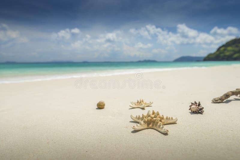 Sjöstjärna och skal på härlig tropisk strandbakgrund med arkivbild