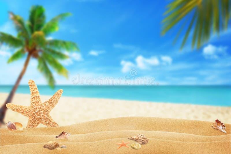 Sjöstjärna och skal på strandsand Stranden och havet med gömma i handflatan i bakgrund royaltyfria foton