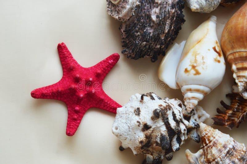 Sjöstjärna och snäckskal på vit bakgrund arkivfoto