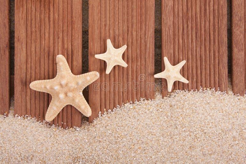 Sjöstjärna och trä arkivbilder