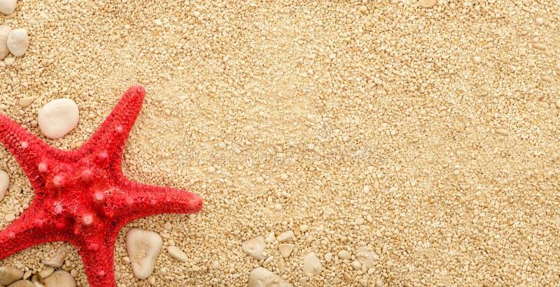 Sjöstjärna på den kust- sanden royaltyfria bilder