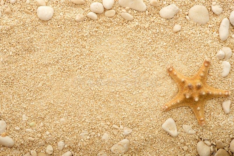 Sjöstjärna på den kust- sanden royaltyfri bild