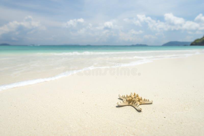 Sjöstjärna på härlig tropisk strandbakgrund med den blåa horisonten royaltyfri bild
