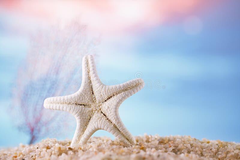 Sjöstjärna på sand med det tropiska havet arkivfoto