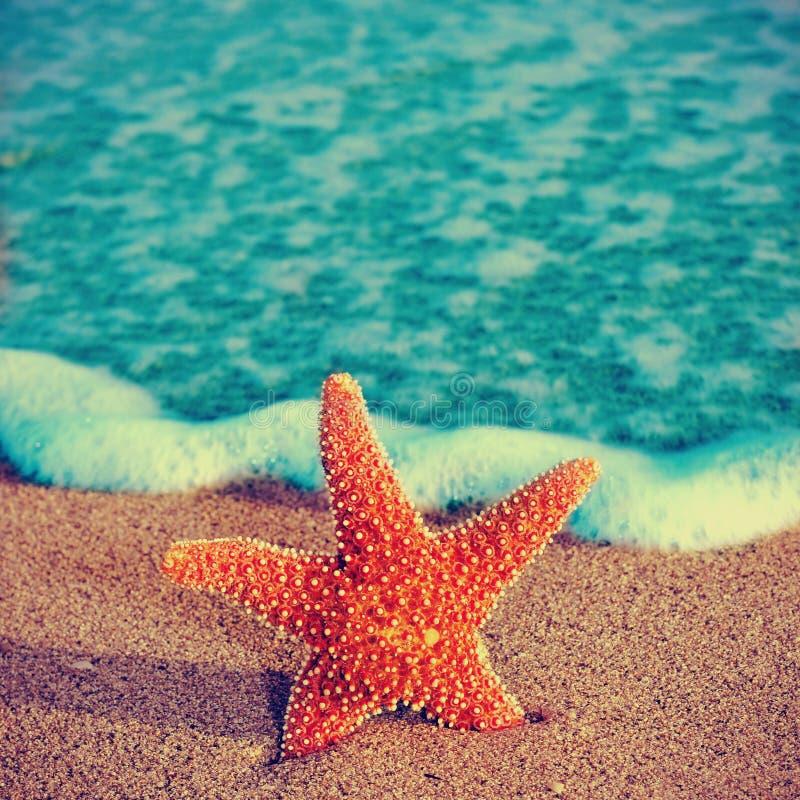 Sjöstjärna på sanden av en strand royaltyfri fotografi