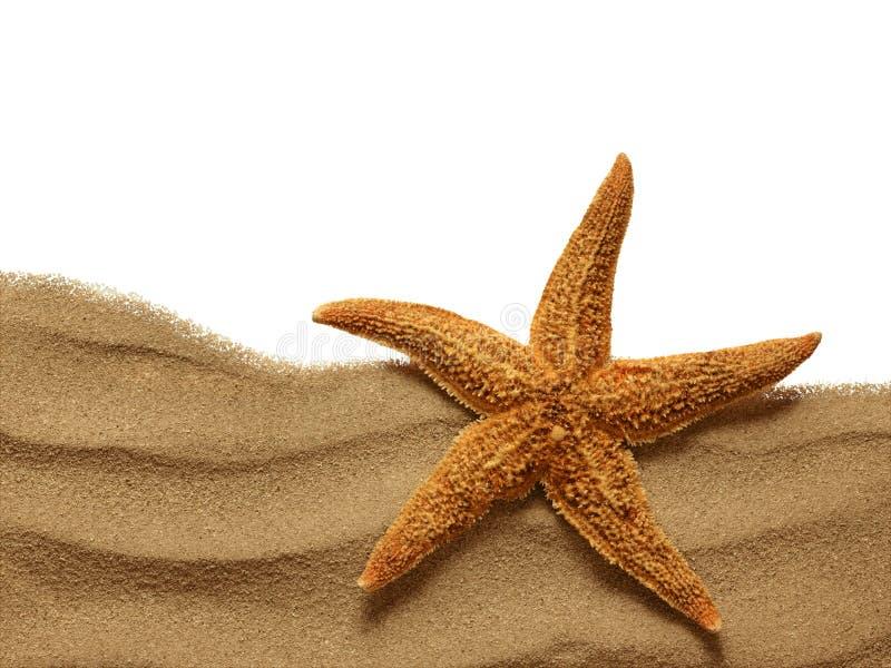 Sjöstjärna på strandsanden royaltyfri bild