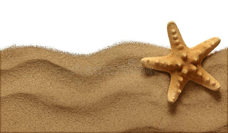 Sjöstjärna på strandsanden royaltyfri fotografi