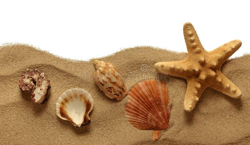 Sjöstjärna på strandsanden arkivbild