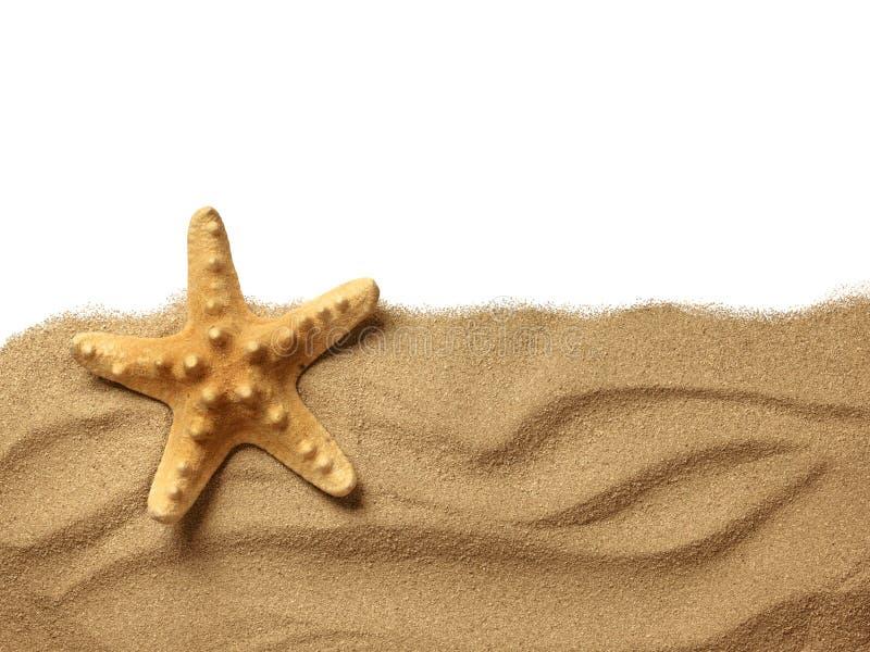 Sjöstjärna på strandsanden arkivfoto
