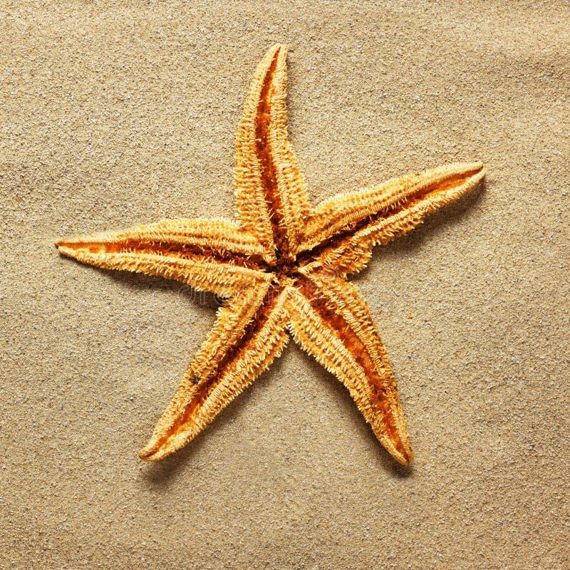 Sjöstjärna på strandsanden arkivbilder