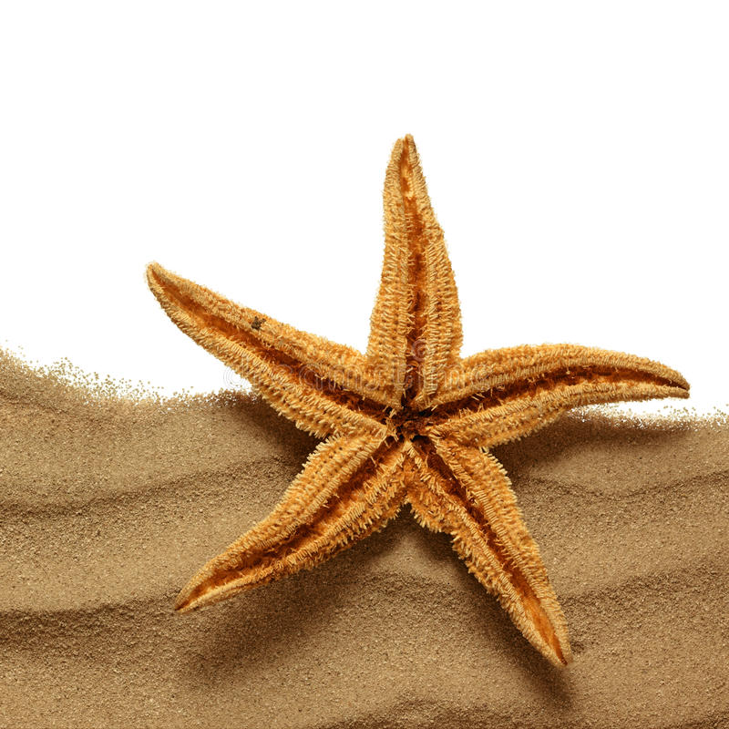 Sjöstjärna på strandsanden royaltyfria bilder
