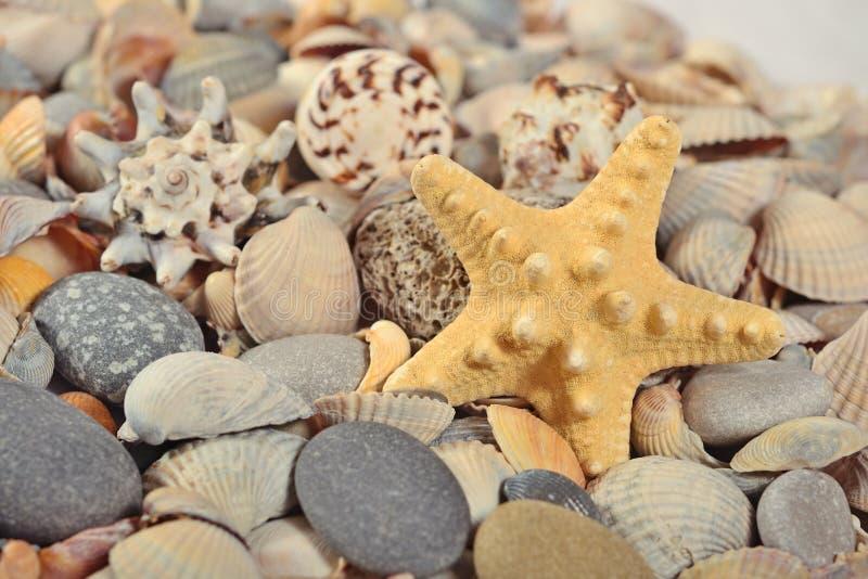 Sjöstjärna, snäckskal och kiselstenar royaltyfri foto