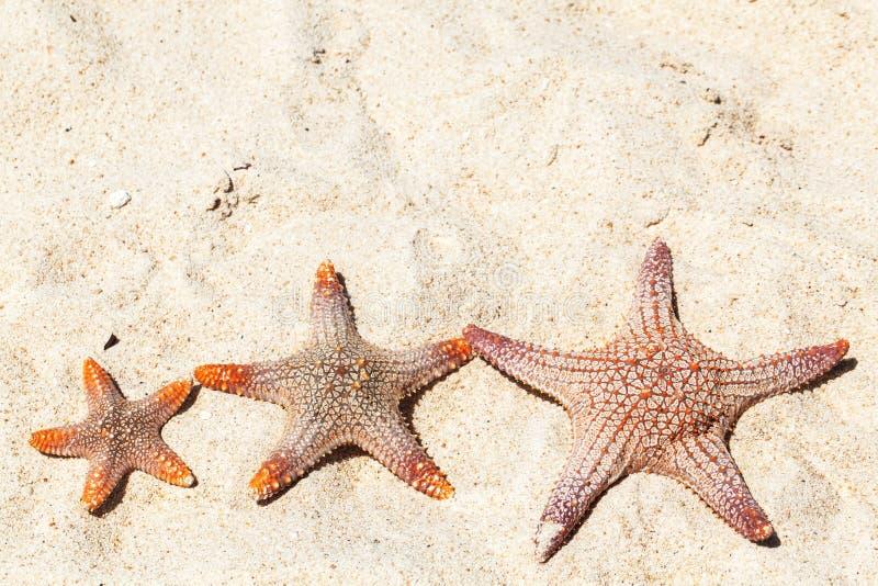 Sjöstjärna tre på stranden royaltyfria foton