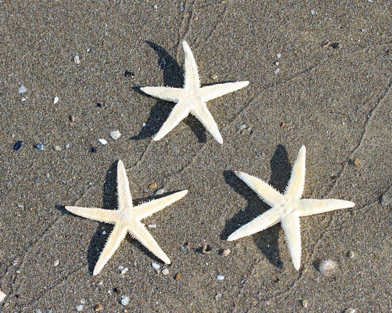 Sjöstjärna tre på tropisk havsstrand 1 arkivfoto