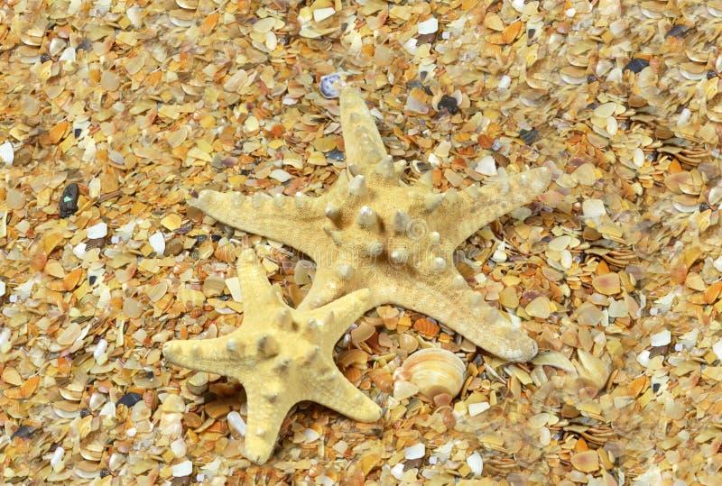 Sjöstjärna två på havsstranden royaltyfria bilder