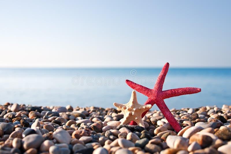 Sjöstjärna två på stranden arkivfoton