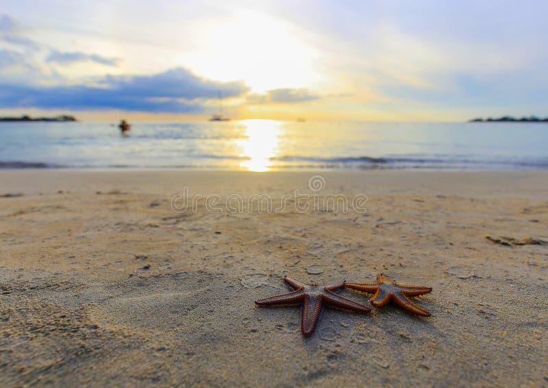 Sjöstjärna två på stranden på solnedgången, en romantisk metafor royaltyfria foton