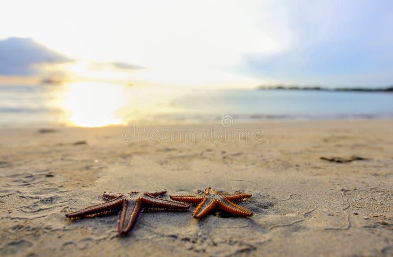 Sjöstjärna två på stranden på solnedgången, en romantisk metafor arkivbild