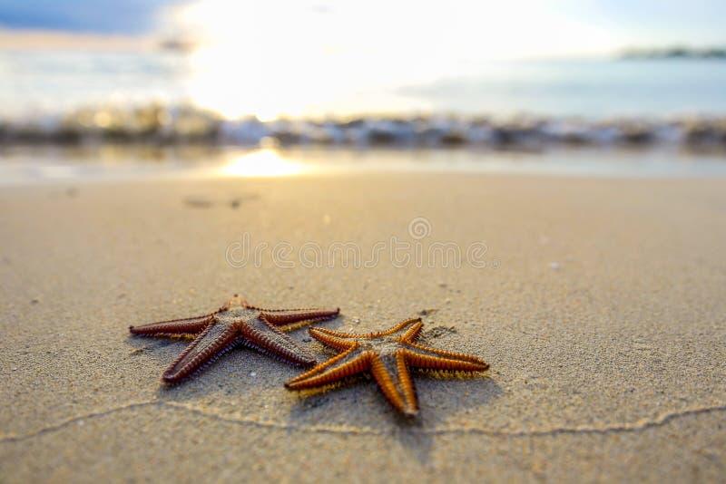 Sjöstjärna två på stranden på solnedgången, en romantisk metafor royaltyfri fotografi