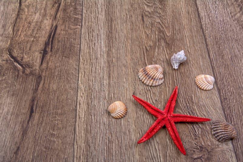 Sjöstjärnan och havet beskjuter på en träbakgrund arkivbild