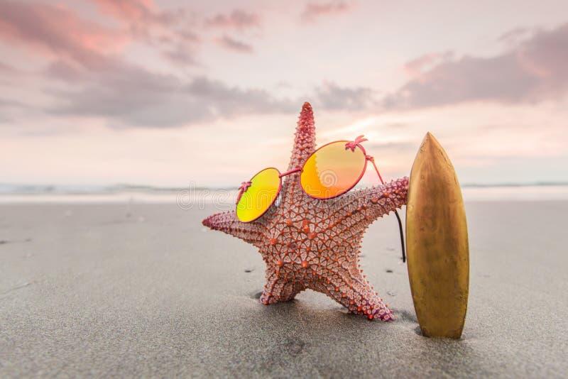 Sjöstjärnasurfare på stranden fotografering för bildbyråer