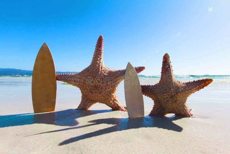 Sjöstjärnasurfare på stranden arkivbild
